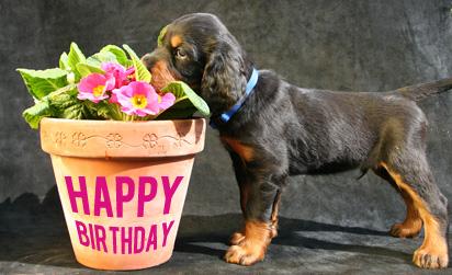Gluckwunsche Geburtstag Hund Der Lustige Geburtstagsgluckwunsche